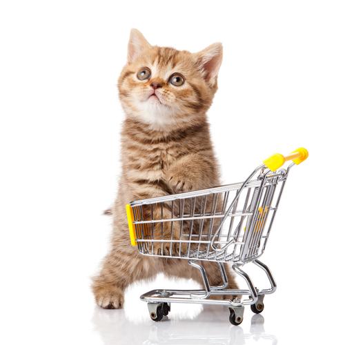 Kitten in small shopping cart