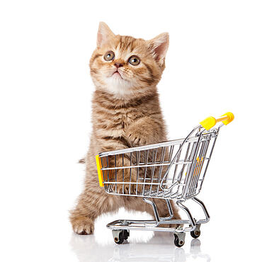 Kitten in small shopping cart