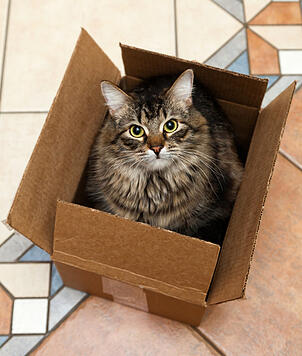Cat_in_box