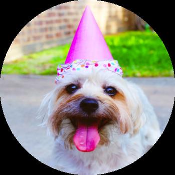 birthday dog-3.png